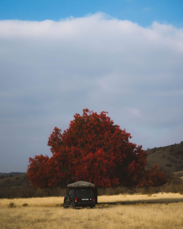 Lada Niva with Roof top tent and big red tree in Vashlovani